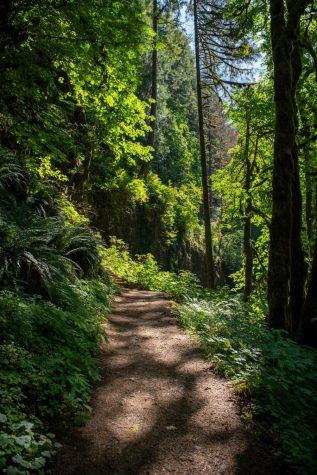 Trail Hunter Guide
